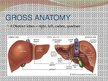 Презентация 'Liver - Anatomy and Functions', 3.
