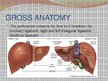 Презентация 'Liver - Anatomy and Functions', 4.