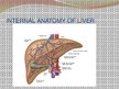 Презентация 'Liver - Anatomy and Functions', 6.
